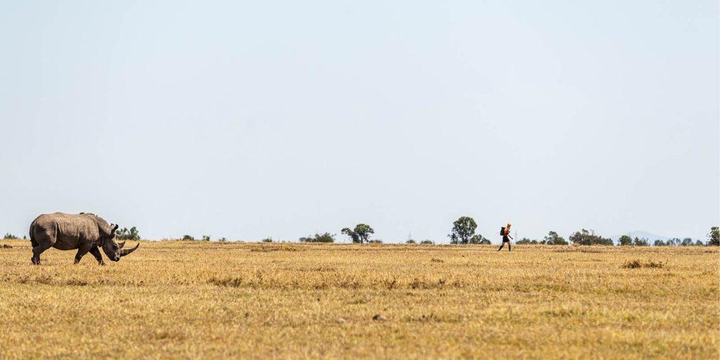 White rhino and runner 2019 Kenya