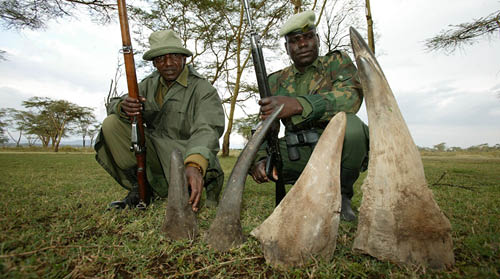 Rangers and rhino horns