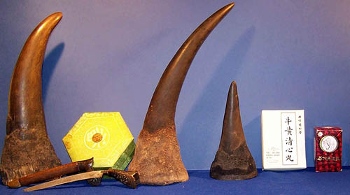 Illegal rhino horns